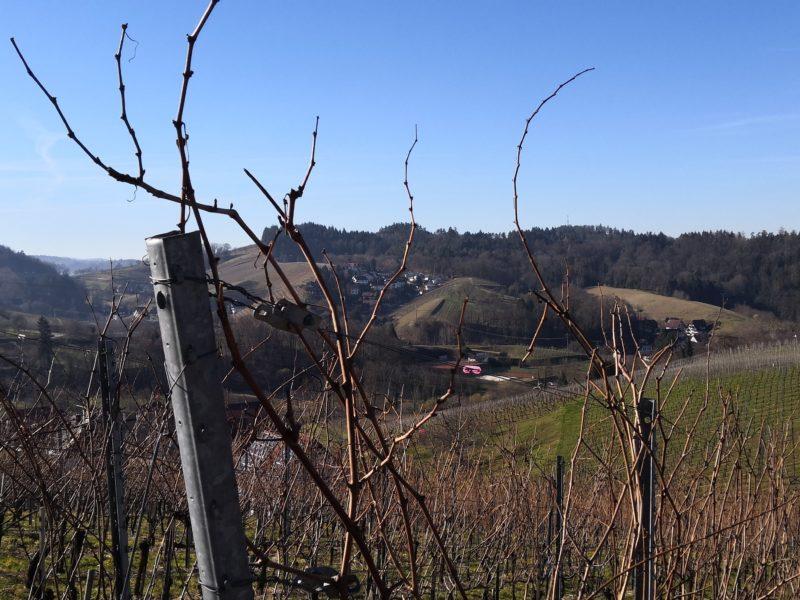 Mit dem Wohnmobil im Schwarzwald: Sasbachwalden