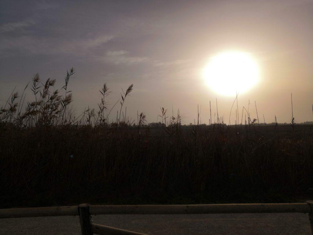 Im Ebrodelta