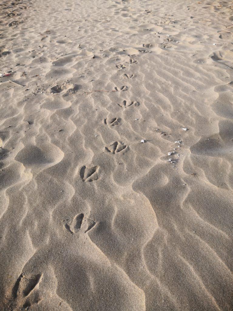 Am Strand von Castellón de la Plana
